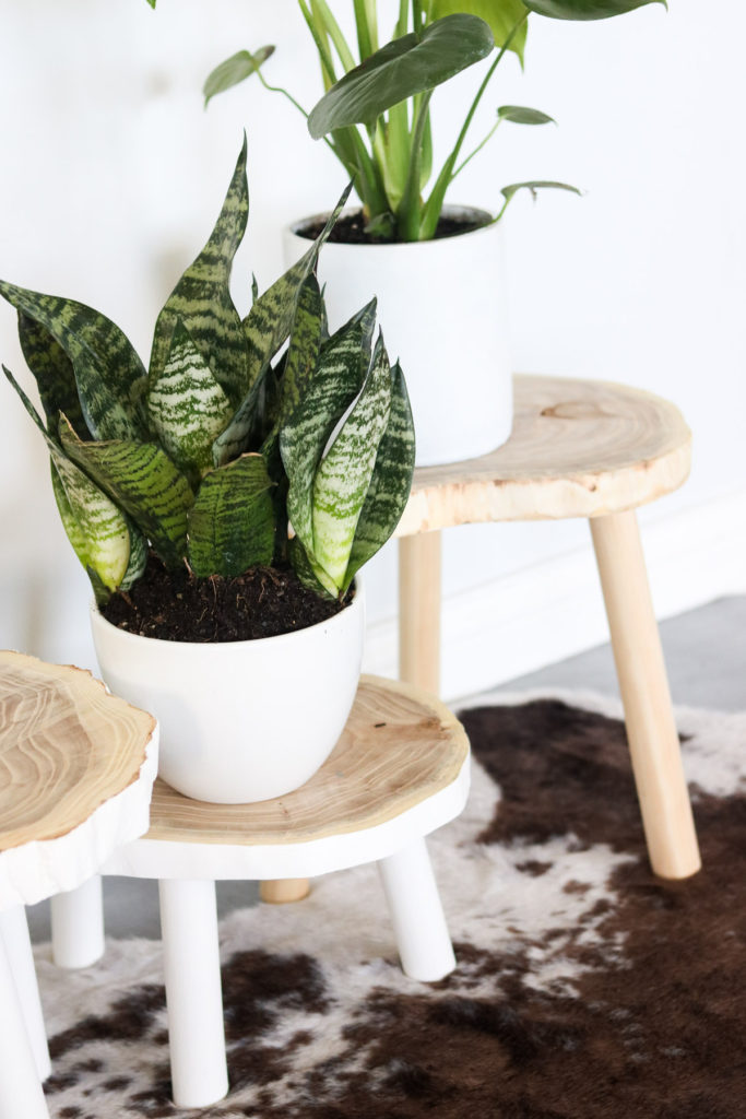 Incredible Diy Wood Plant Stand Lily Ardor Squirreltailoven Fun Painted Chair Ideas Images Squirreltailovenorg